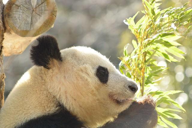 4. 우에노 동물원