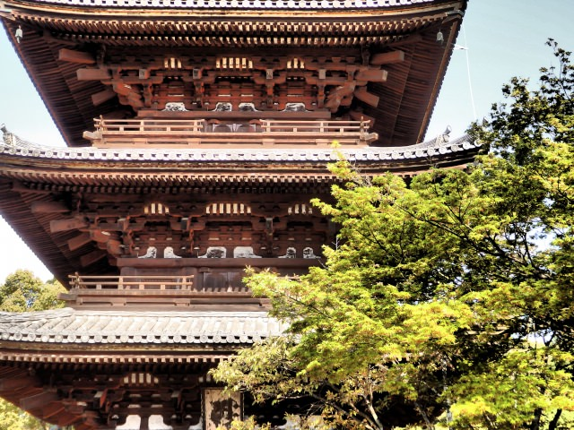 6. 늦게 피는 오무로사쿠라가 아름다운 「닌나지(仁和寺_인화사)」