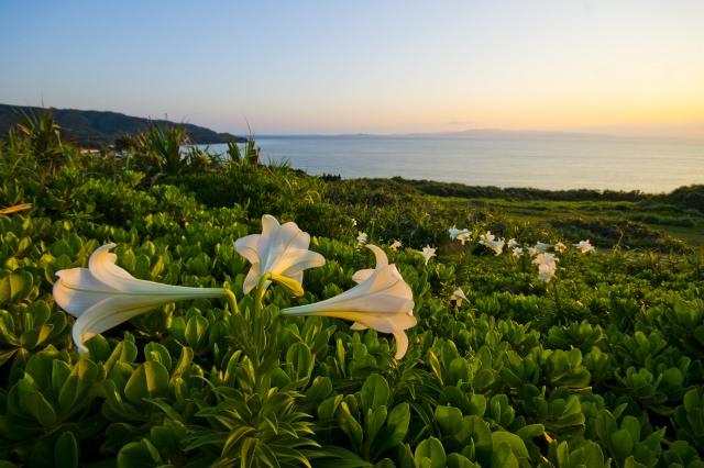 8. 이시가키 섬의 아름다운 풍경을 한눈에 볼수 있는 [우간자키]