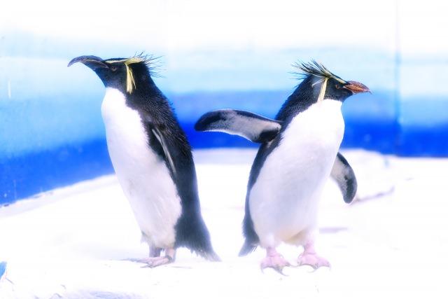 8. 홋카이도 관광 명소 중에 특히 인기있는 [마루야마 동물원]