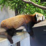 【일본 오키나와 동물원 정리】현지인이 추천하는 동물원 BEST5!