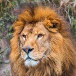 【일본 후쿠오카 동물원 정리】현지인이 추천하는 동물원 BEST5!