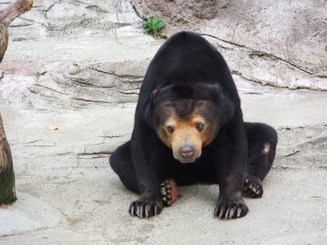 7.동물을 좋아하는 분이라면「텐노지 동물원」