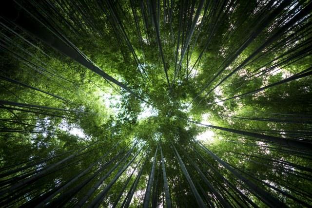 7. 푸르른 대나무 정원이 아름다운 대나무 사찰「호-코쿠지」