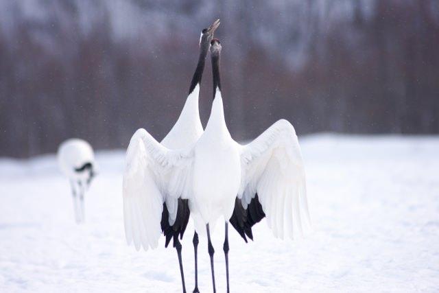 1. 거대한 대자연 아름다운 풍경「쿠시로 습원」