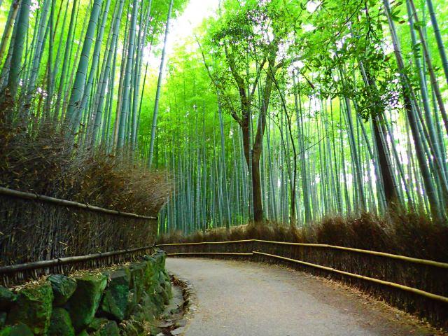 1. 맑고 투명한 공기, 그림같은 풍경 「대나무 숲(치쿠린)」
