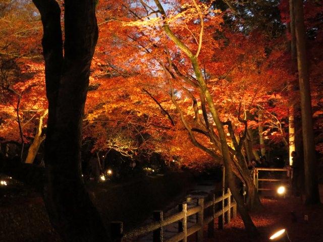 6. 300그루나 되는 단풍나무가 볼 수 있는 명소! '기타노텐만 궁'