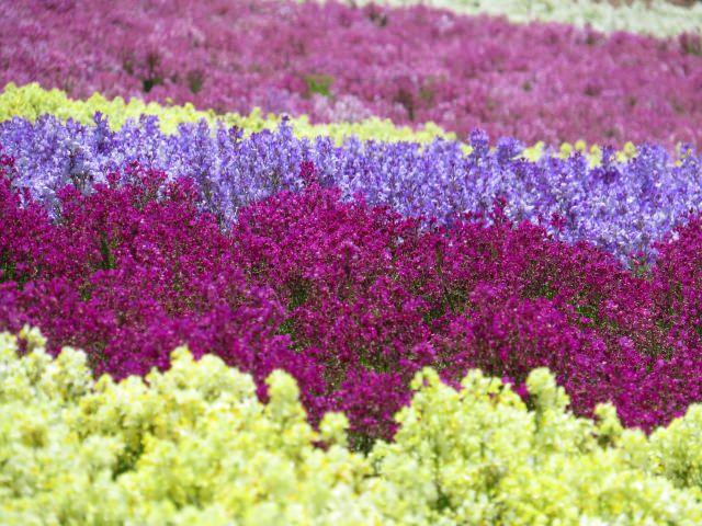 9. 사계절을 느끼면서 꽃들로부터 치유 받는 명소 '구주 꽃 공원'