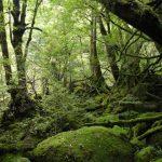【일본 가고시마 자유 여행 필수 코스】현지인이 추천하는 인기 관광 명소 BEST10!