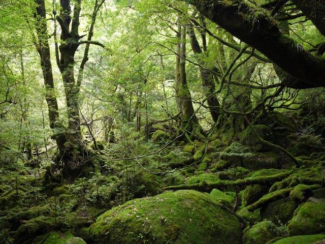 1. 손길이 닿지 않은 대자연을 만끽할 수 있는 세계유산 '야쿠시마'